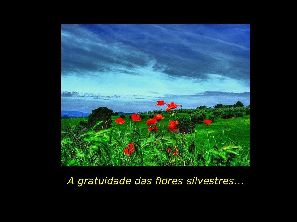 A gratuidade das flores silvestres...