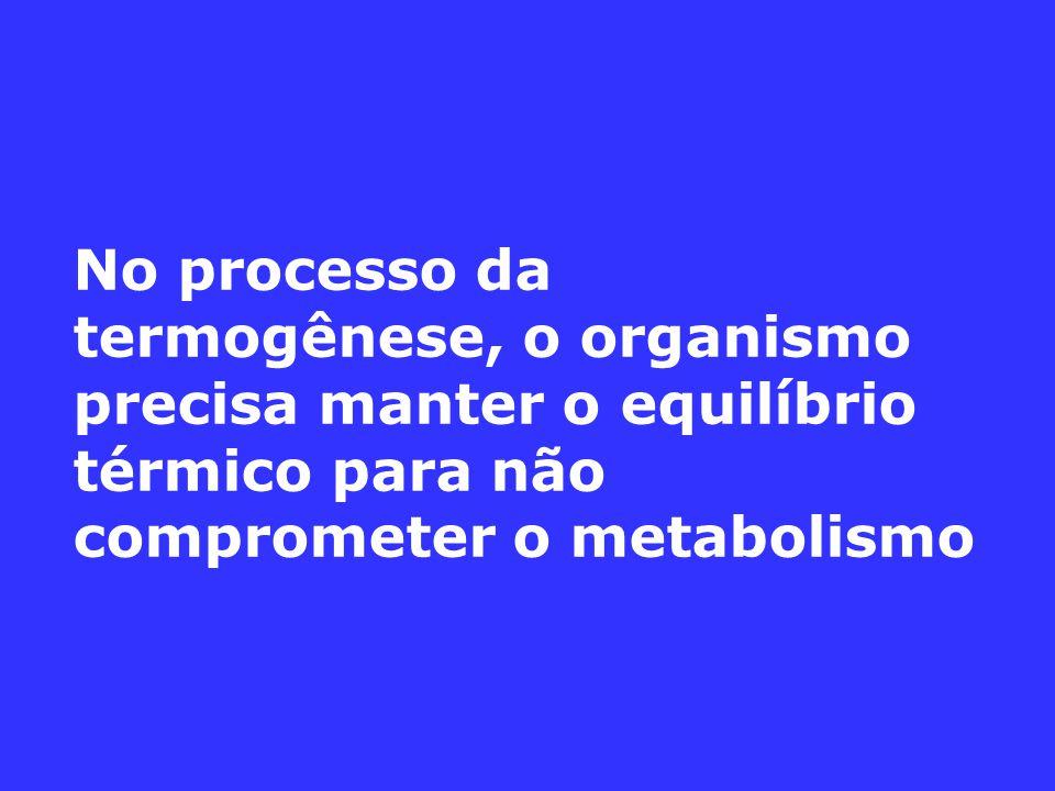 No processo da termogênese, o organismo precisa manter o equilíbrio térmico para não comprometer o metabolismo