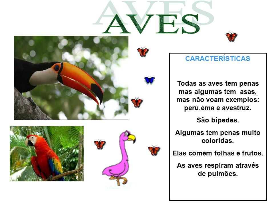 AVES CARACTERÍSTICAS. Todas as aves tem penas mas algumas tem asas, mas não voam exemplos: peru,ema e avestruz.