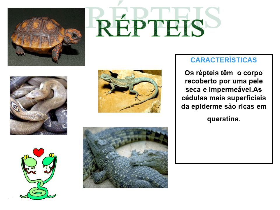 RÉPTEIS CARACTERÍSTICAS