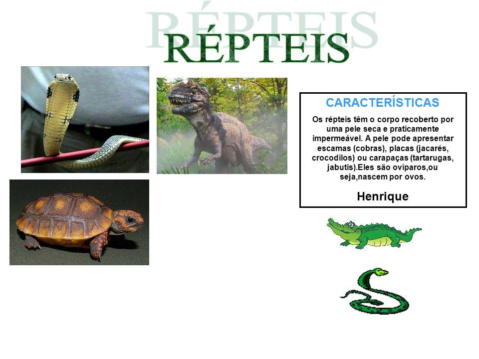 RÉPTEIS CARACTERÍSTICAS Henrique