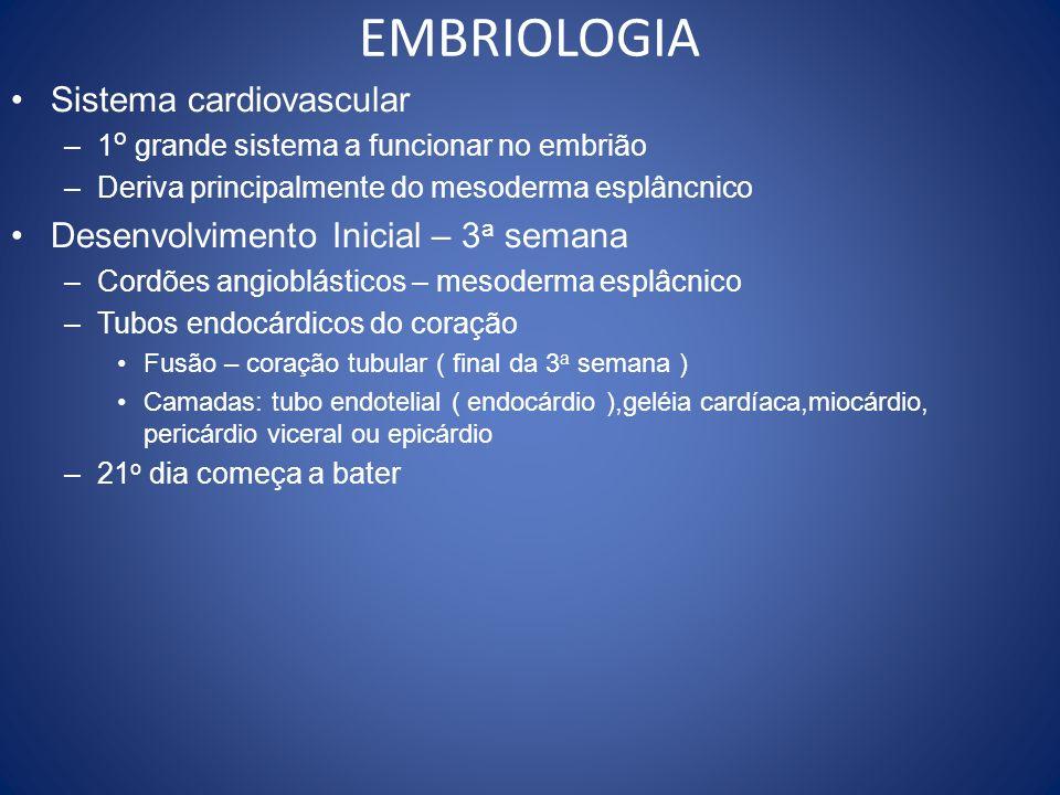 EMBRIOLOGIA Sistema cardiovascular Desenvolvimento Inicial – 3a semana