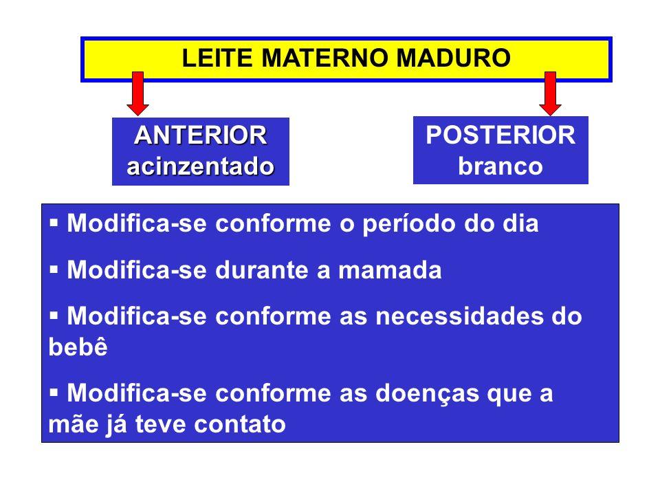 LEITE MATERNO MADURO Modifica-se conforme o período do dia. Modifica-se durante a mamada. Modifica-se conforme as necessidades do bebê.