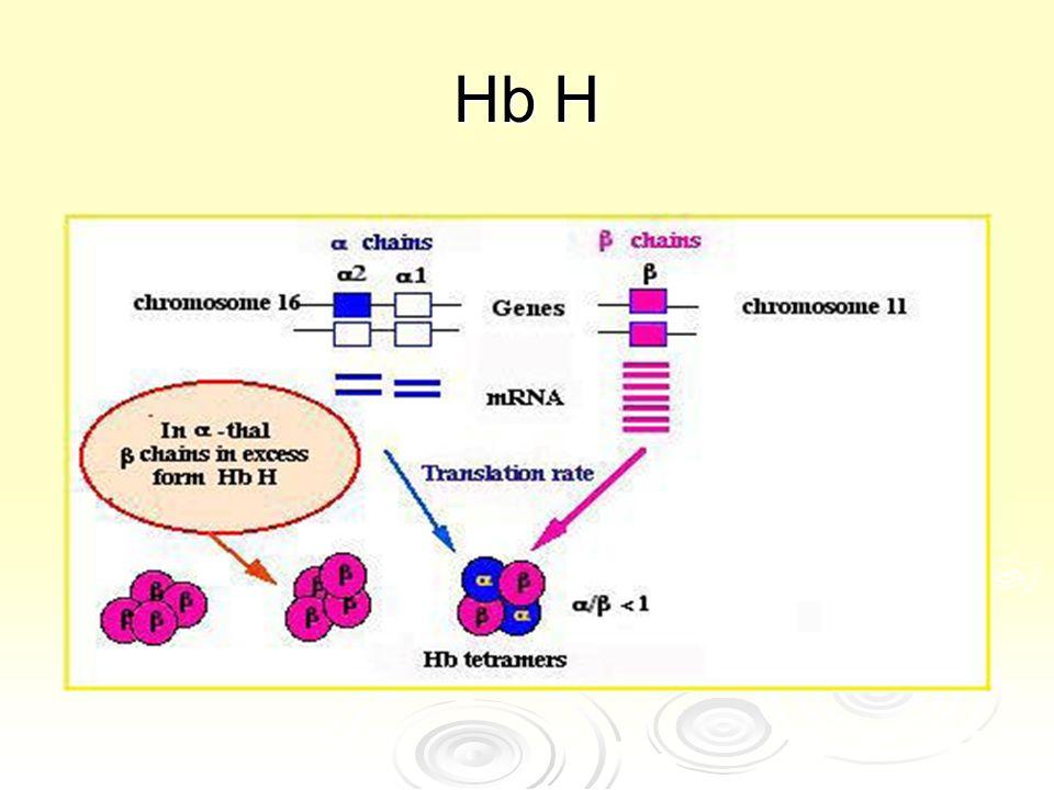 Hb H .