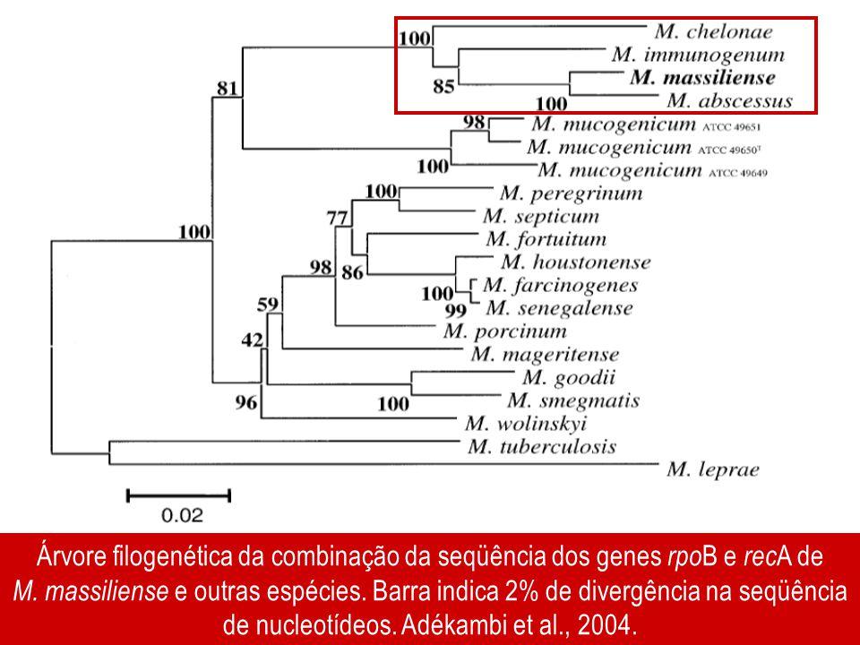 Árvore filogenética da combinação da seqüência dos genes rpoB e recA de