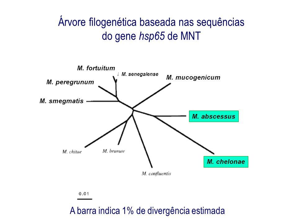 Árvore filogenética baseada nas sequências do gene hsp65 de MNT