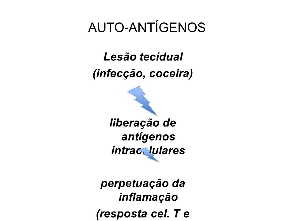 liberação de antígenos intracelulares perpetuação da inflamação