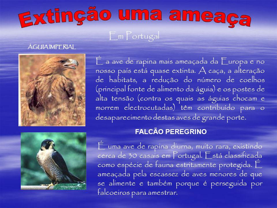 Extinção uma ameaça Em Portugal