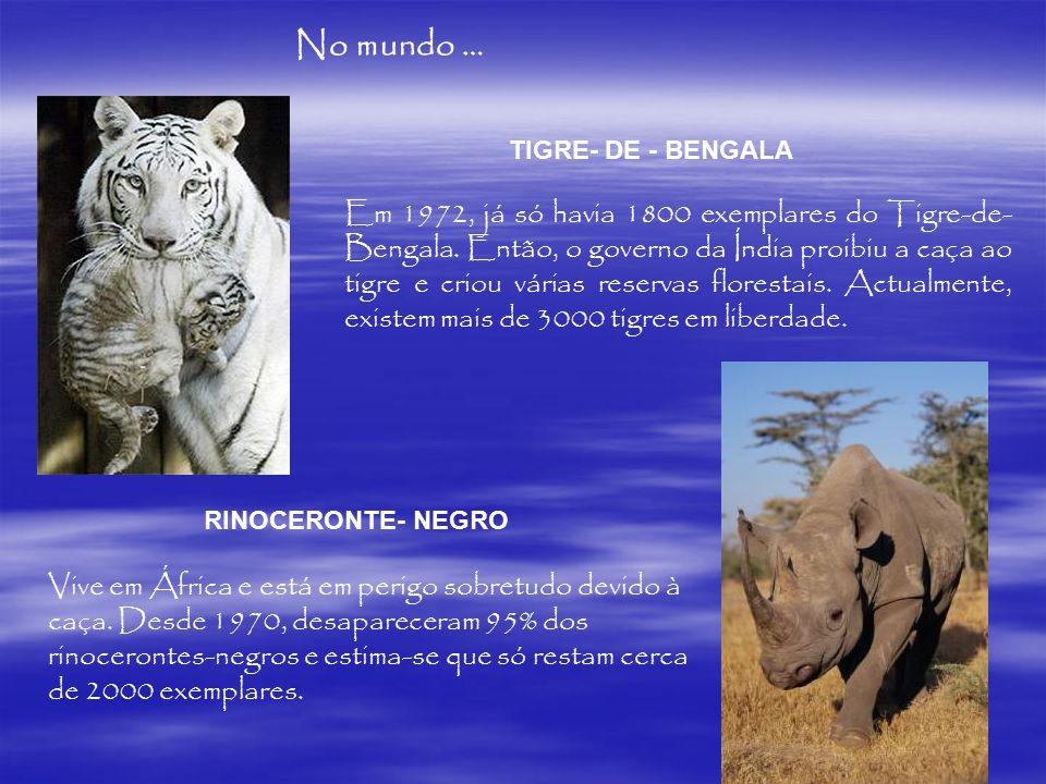 No mundo … No mundo… TIGRE- DE - BENGALA. TIGRE- DE - BENGALA.