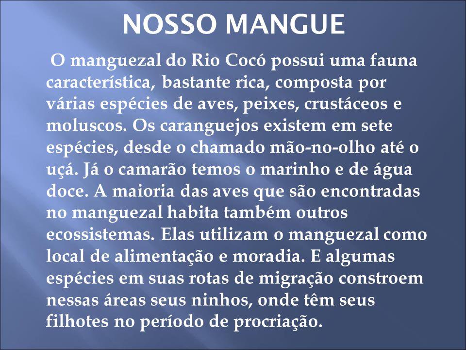 NOSSO MANGUE
