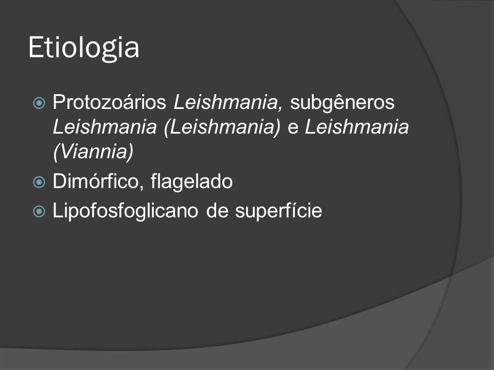 Etiologia Protozoários Leishmania, subgêneros Leishmania (Leishmania) e Leishmania (Viannia) Dimórfico, flagelado.