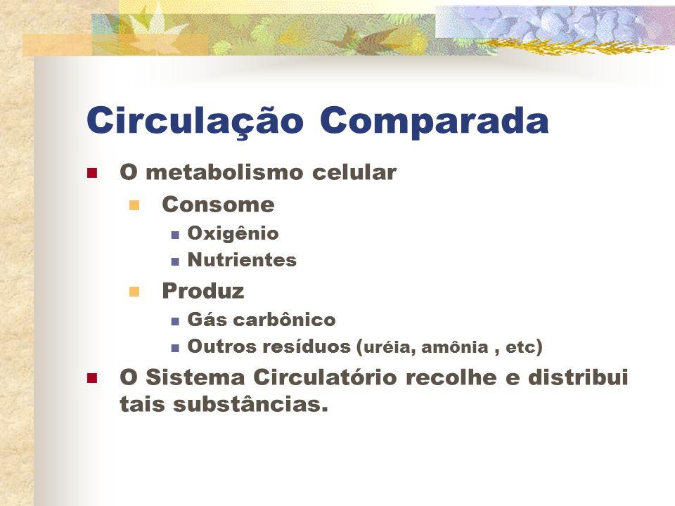 Circulação Comparada O metabolismo celular Consome Produz