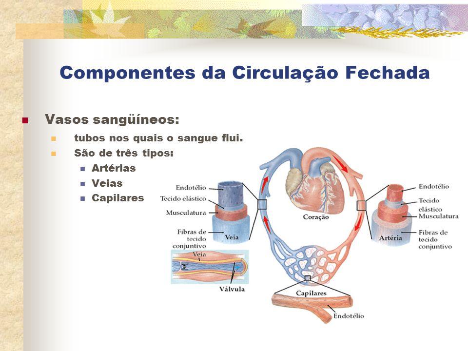 Componentes da Circulação Fechada