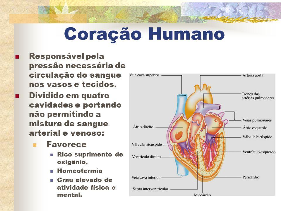 Coração Humano Responsável pela pressão necessária de circulação do sangue nos vasos e tecidos.