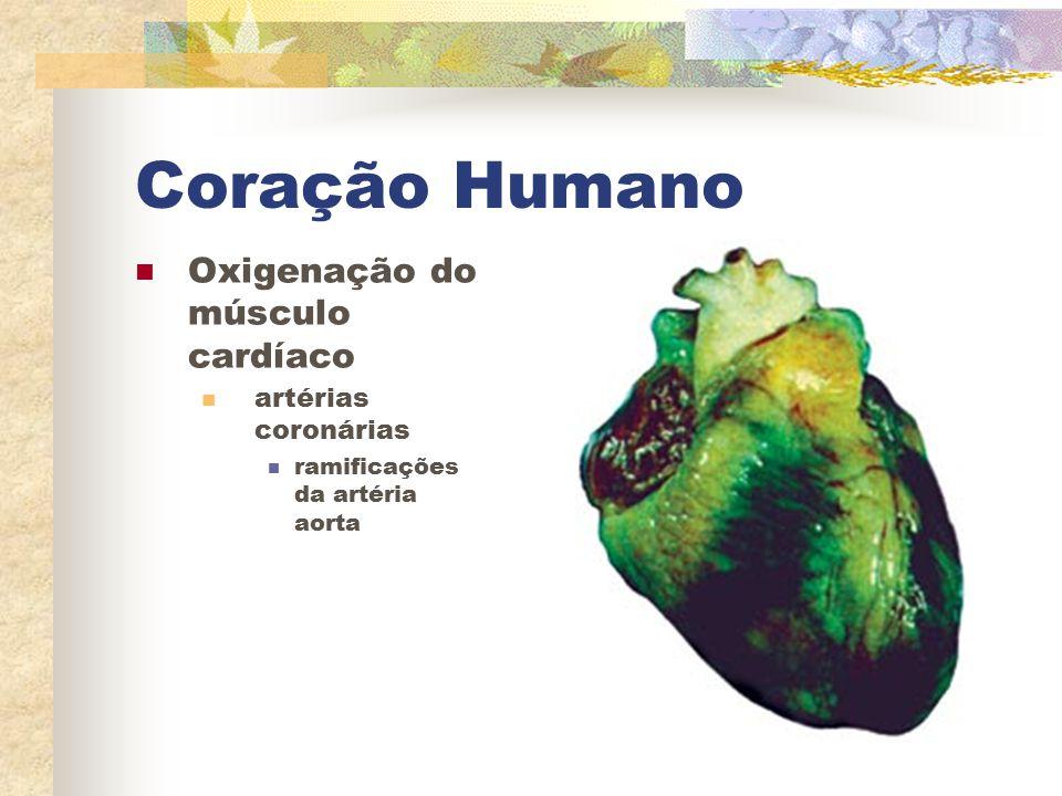 Coração Humano Oxigenação do músculo cardíaco artérias coronárias