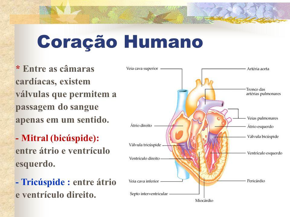 Coração Humano * Entre as câmaras cardíacas, existem válvulas que permitem a passagem do sangue apenas em um sentido.