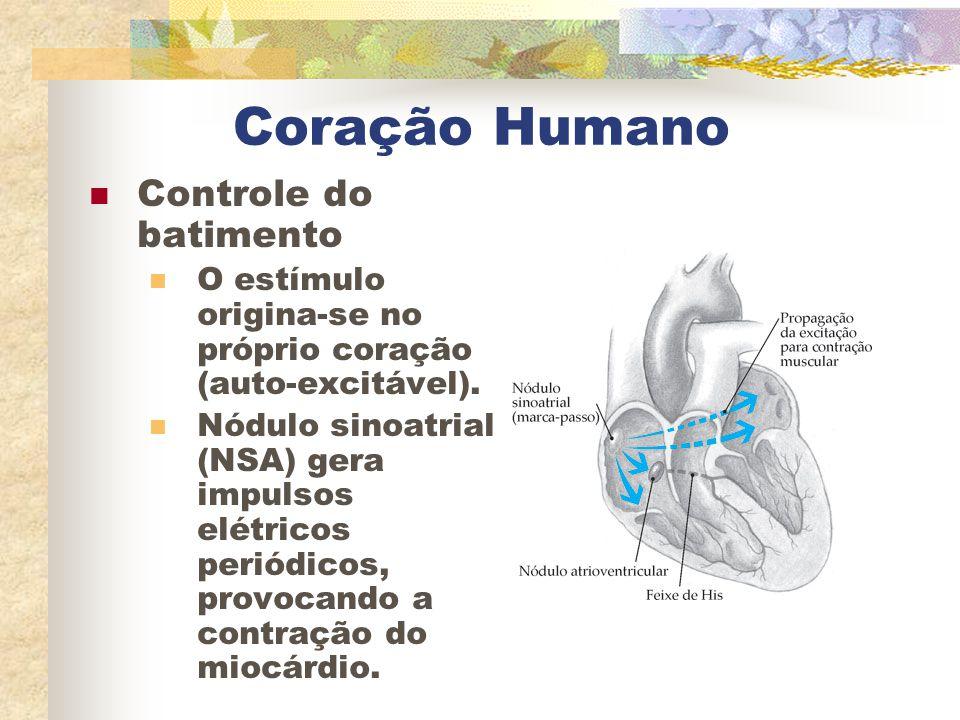 Coração Humano Controle do batimento
