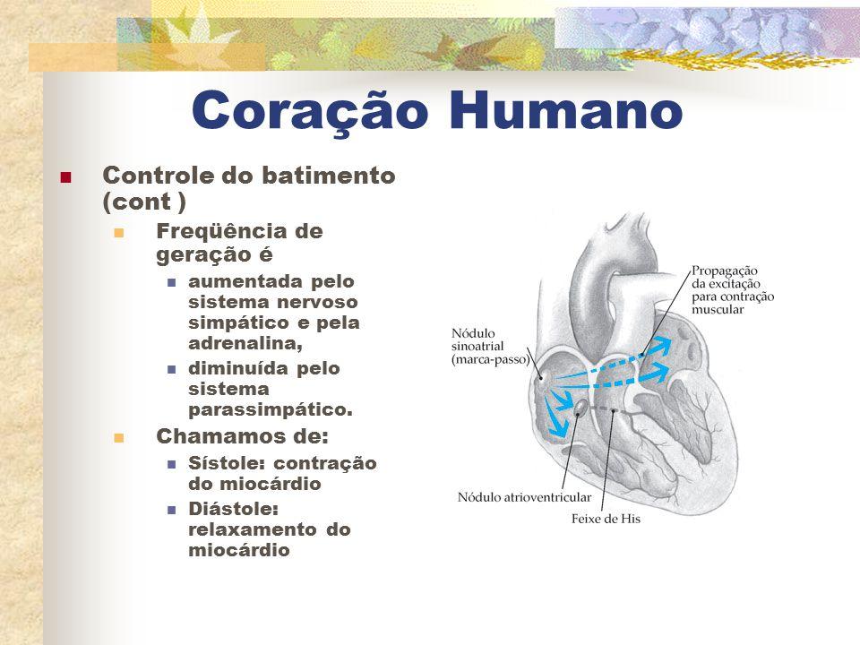Coração Humano Controle do batimento (cont ) Freqüência de geração é