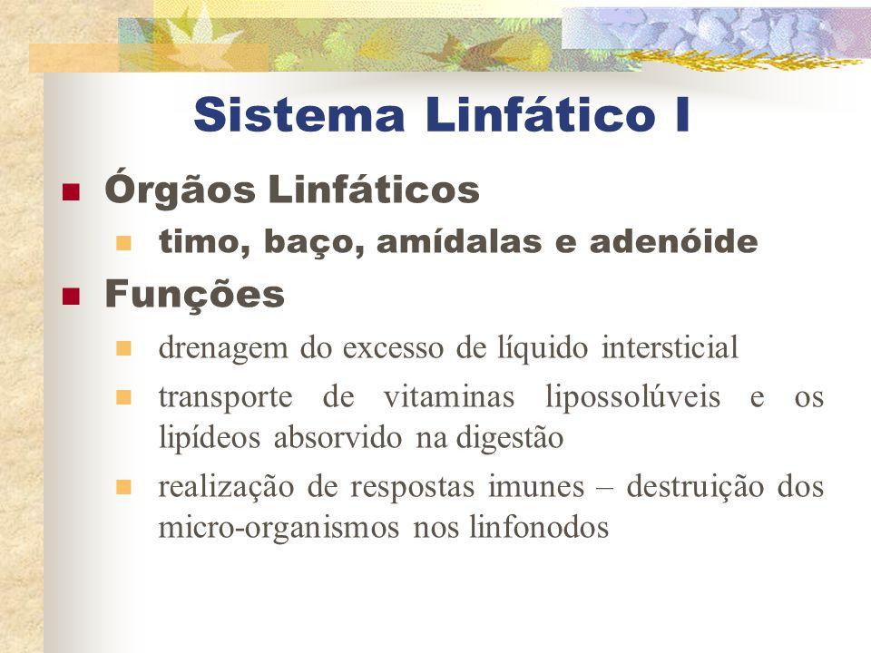 Sistema Linfático I Órgãos Linfáticos Funções