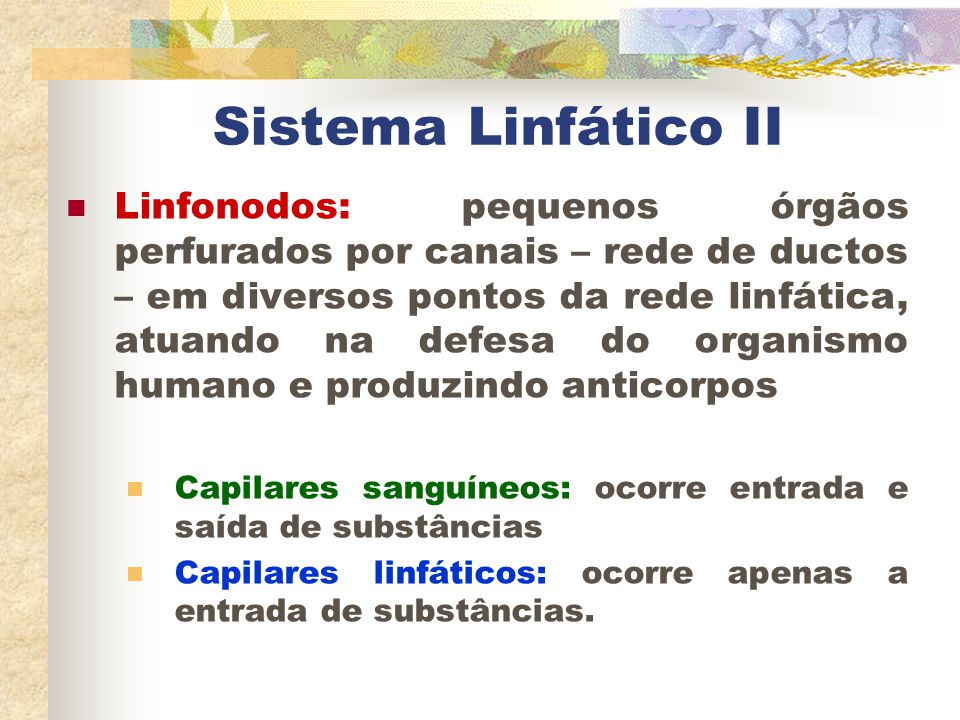 Sistema Linfático II