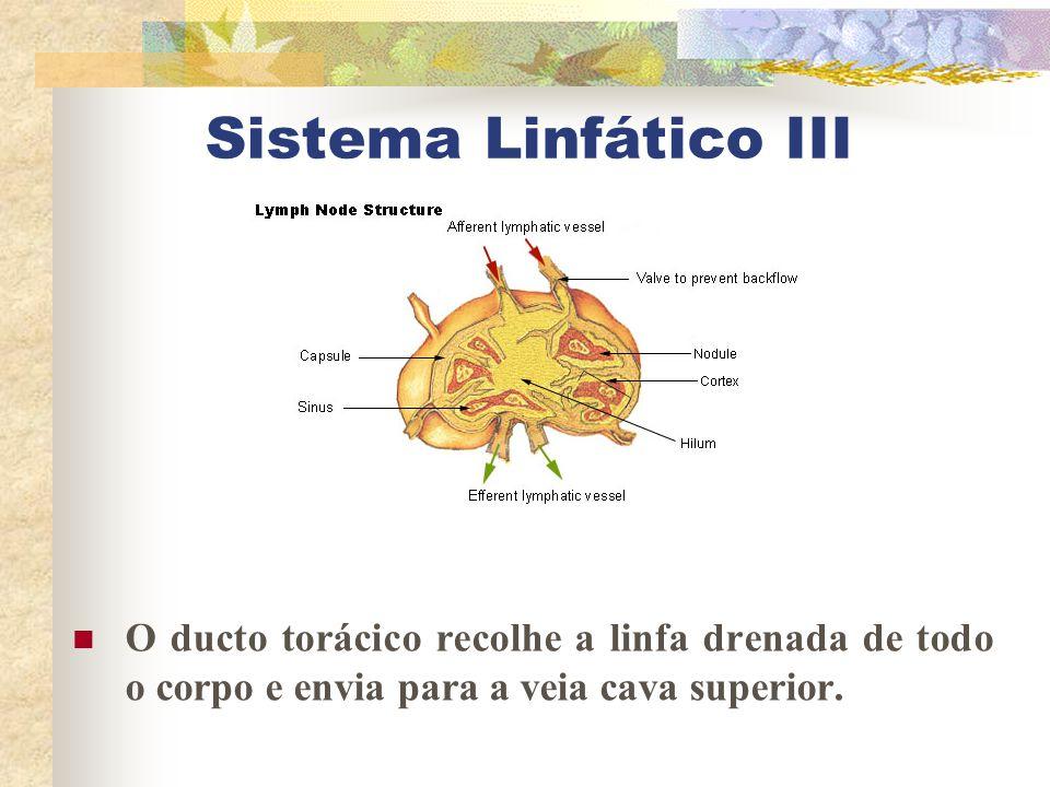Sistema Linfático III O ducto torácico recolhe a linfa drenada de todo o corpo e envia para a veia cava superior.