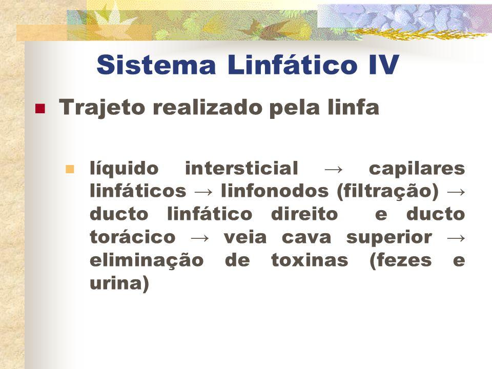 Sistema Linfático IV Trajeto realizado pela linfa