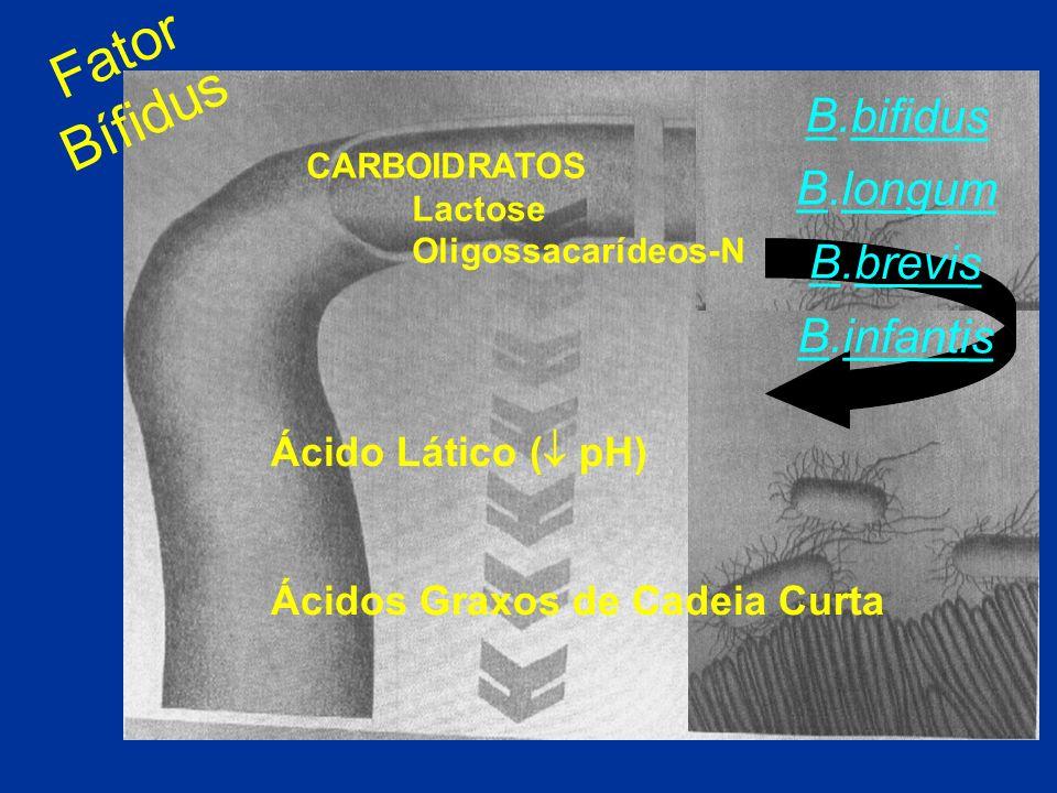Fator Bífidus B.bifidus B.longum B.brevis B.infantis