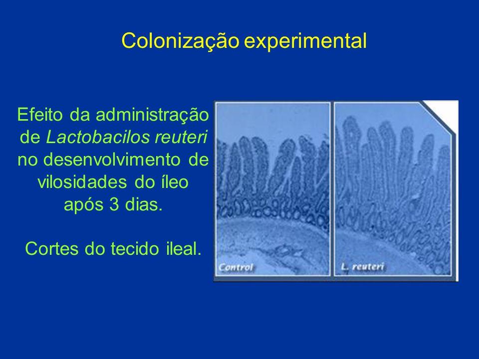 Colonização experimental