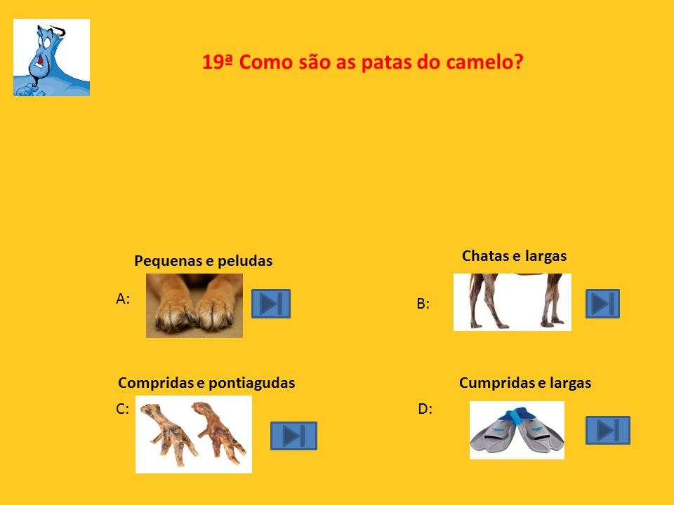 19ª Como são as patas do camelo