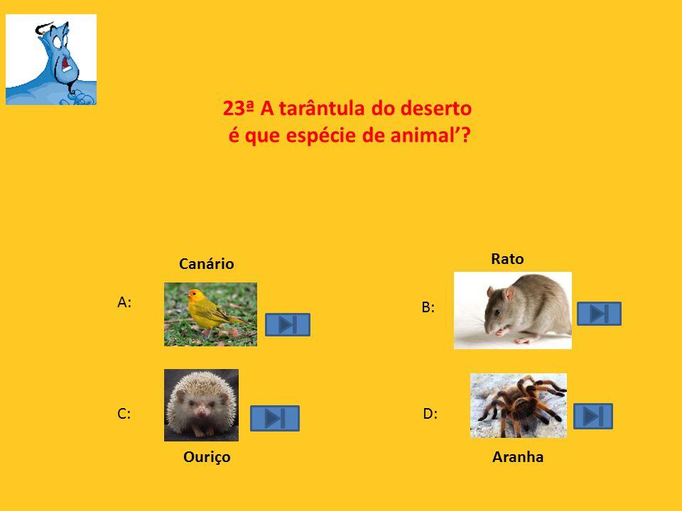 23ª A tarântula do deserto é que espécie de animal'
