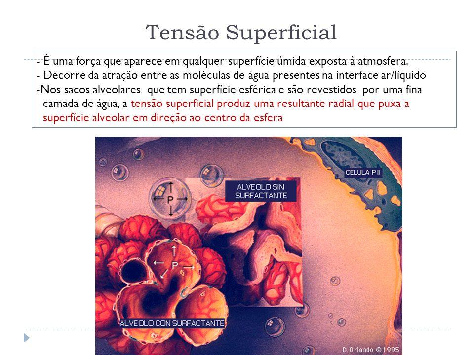 Tensão Superficial - É uma força que aparece em qualquer superfície úmida exposta à atmosfera.