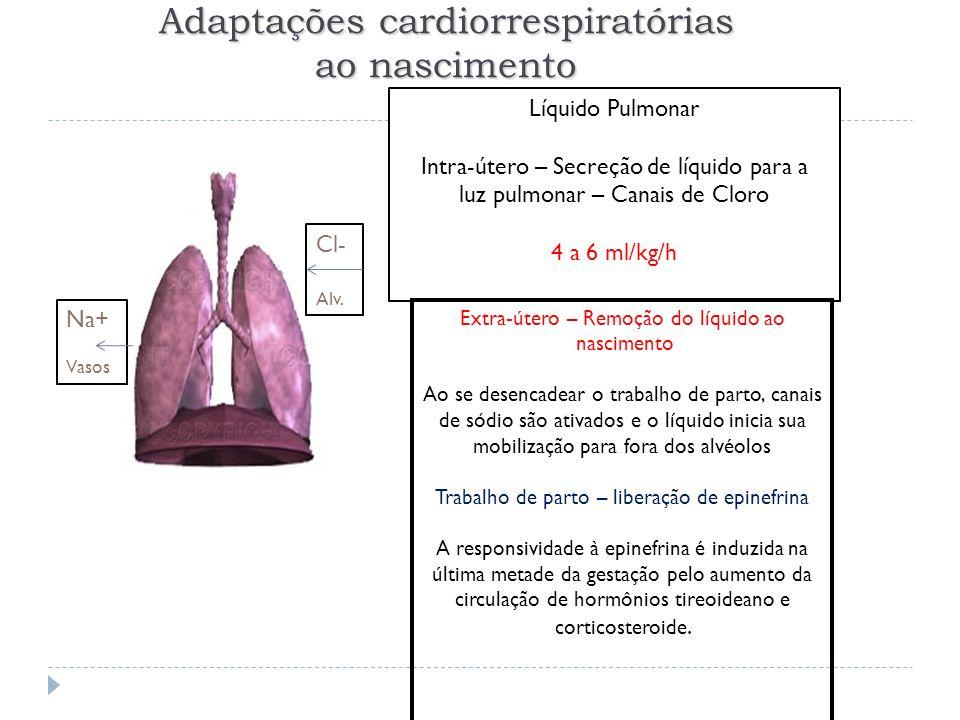 Adaptações cardiorrespiratórias ao nascimento