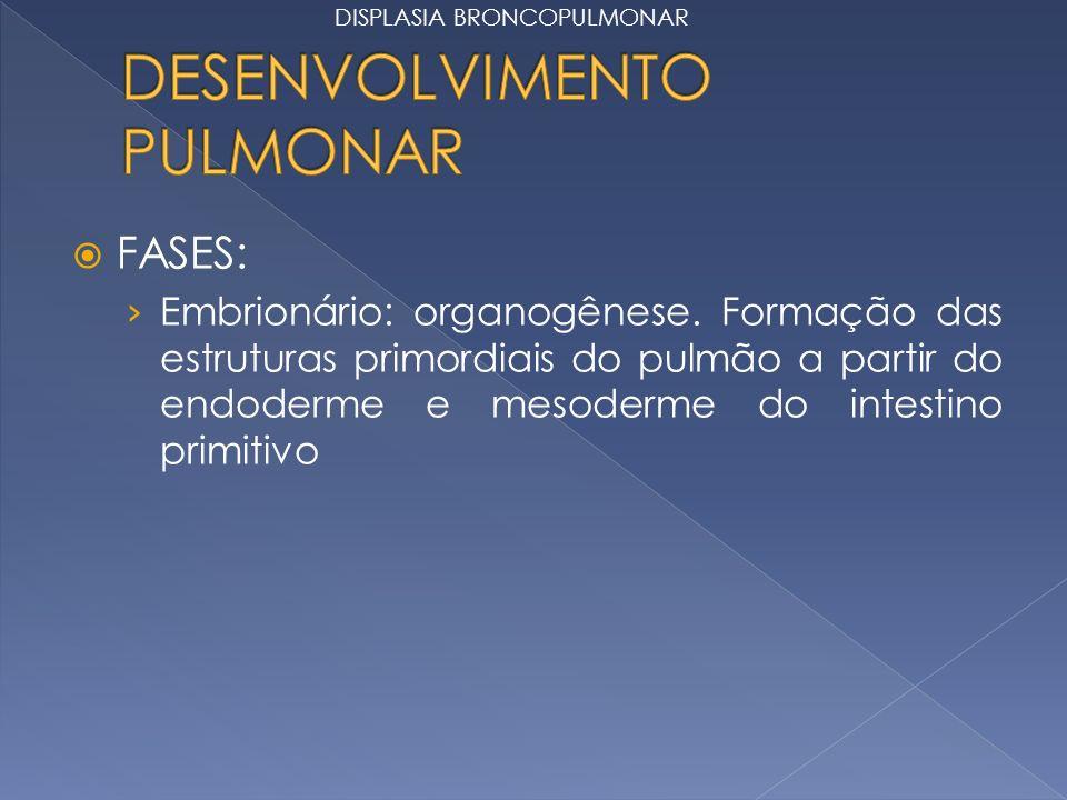 DESENVOLVIMENTO PULMONAR