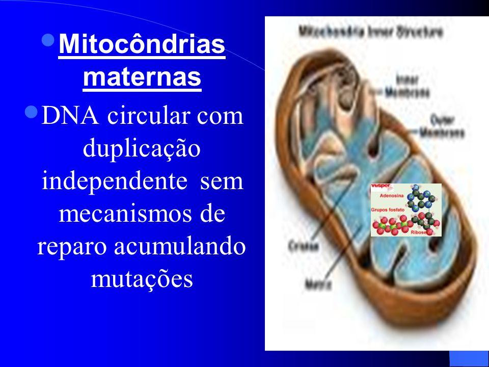Mitocôndrias maternas