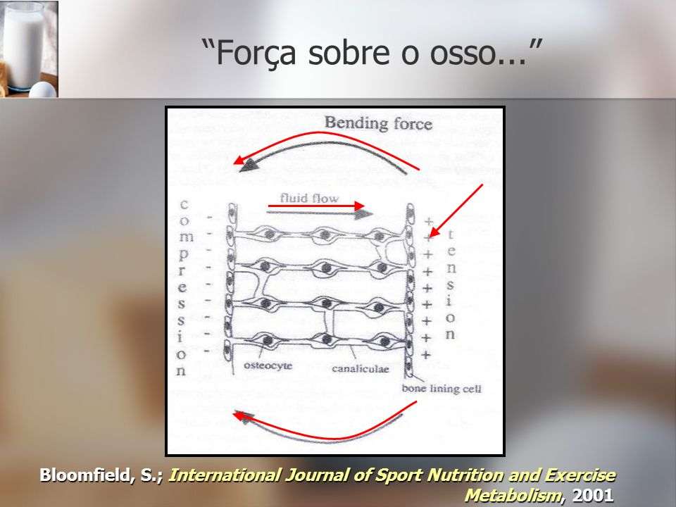 Força sobre o osso... Bloomfield, S.; International Journal of Sport Nutrition and Exercise Metabolism, 2001.