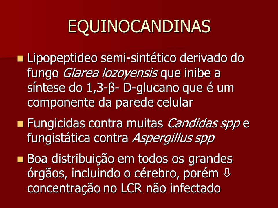 EQUINOCANDINAS