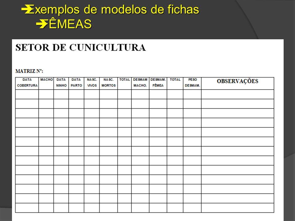 Exemplos de modelos de fichas