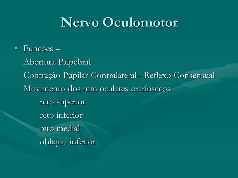 Nervo Oculomotor Funcões – Abertura Palpebral