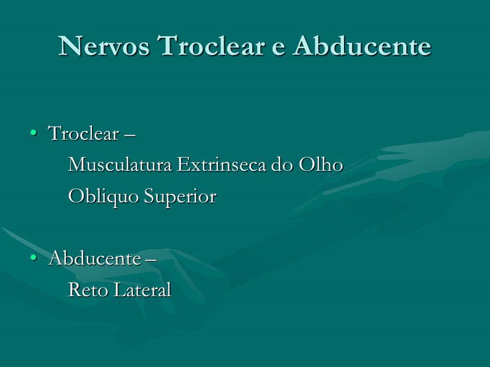 Nervos Troclear e Abducente