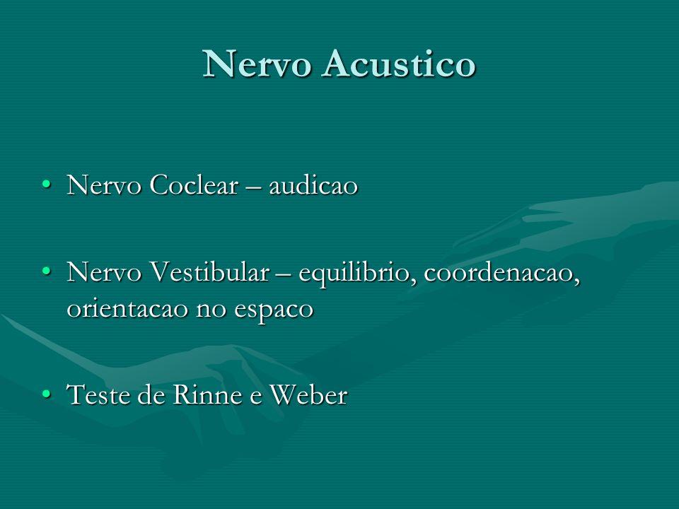 Nervo Acustico Nervo Coclear – audicao