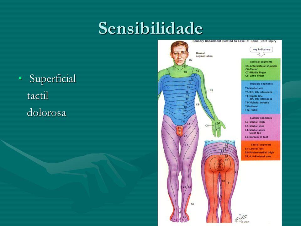 Sensibilidade Superficial tactil dolorosa