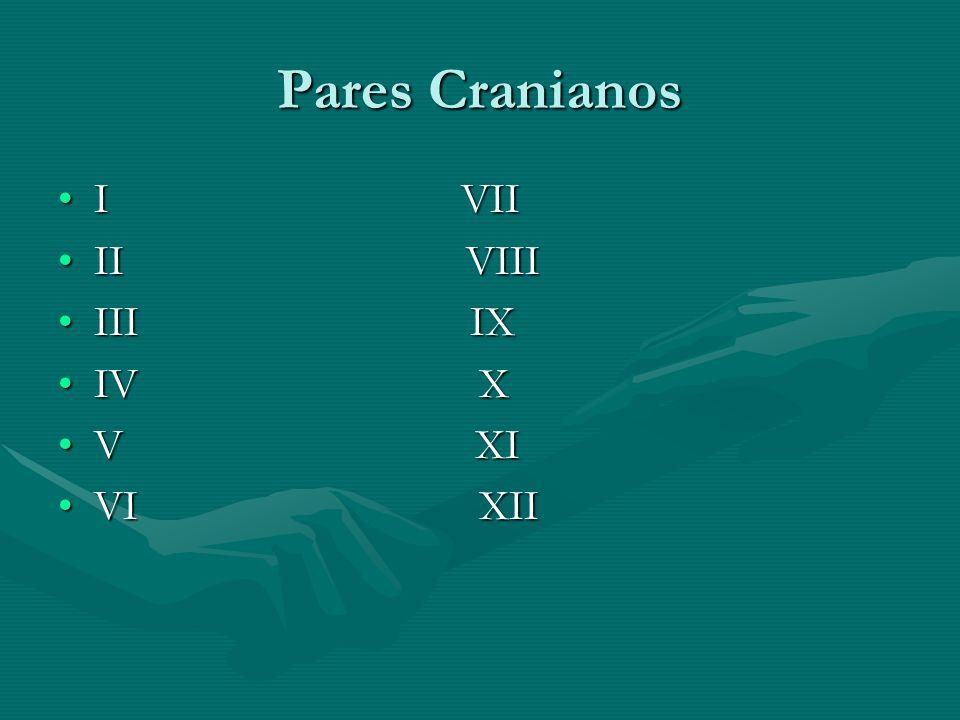 Pares Cranianos I VII. II VIII. III IX.