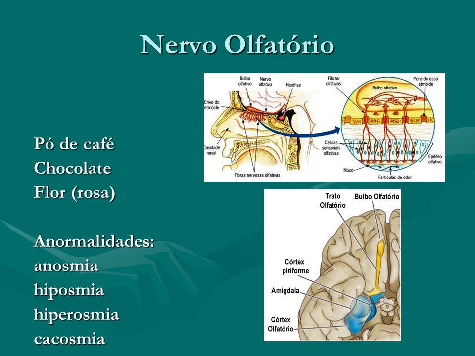 Nervo Olfatório Pó de café Chocolate Flor (rosa) Anormalidades: