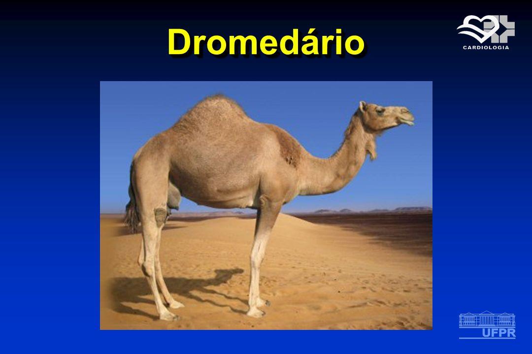 Dromedário