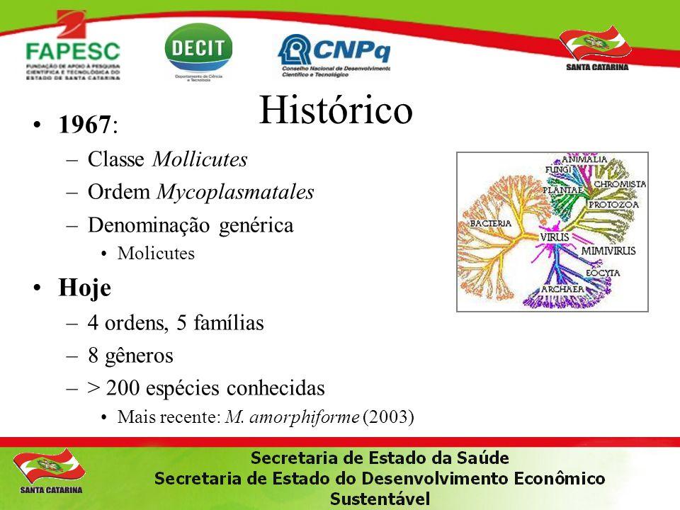 Histórico 1967: Hoje Classe Mollicutes Ordem Mycoplasmatales