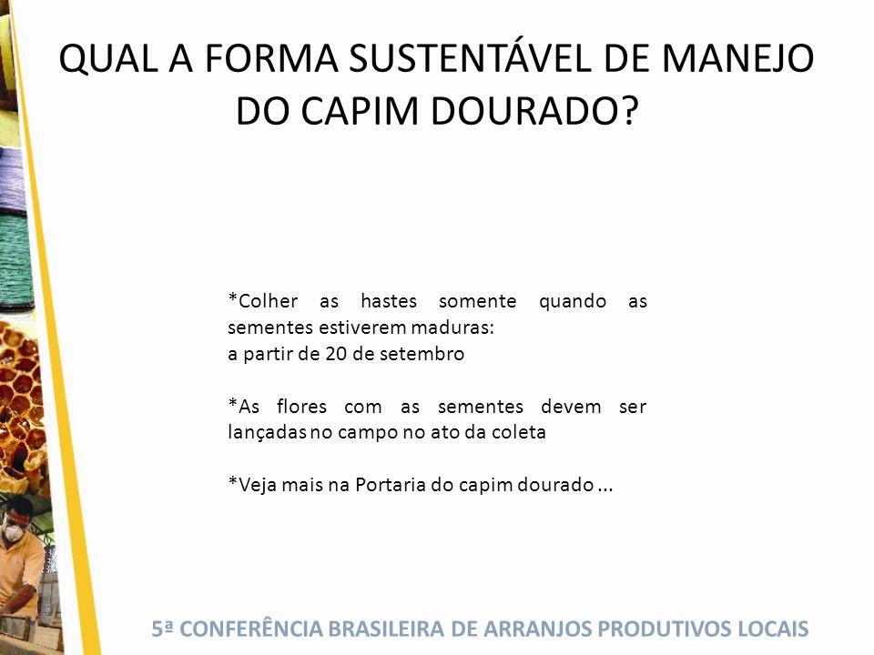QUAL A FORMA SUSTENTÁVEL DE MANEJO DO CAPIM DOURADO