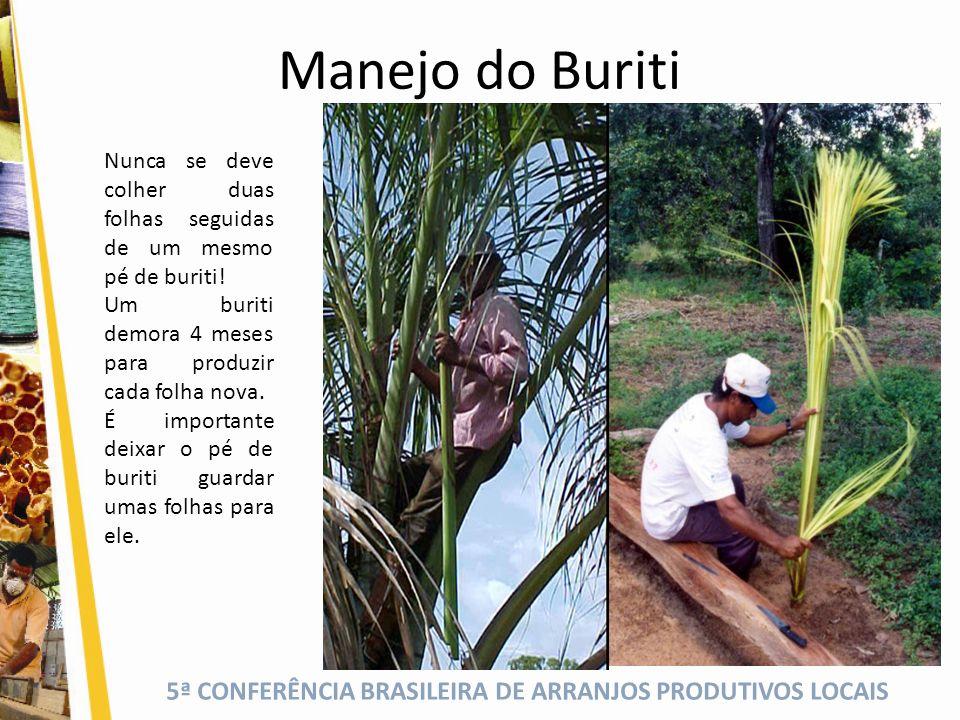 Manejo do Buriti Nunca se deve colher duas folhas seguidas de um mesmo pé de buriti! Um buriti demora 4 meses para produzir cada folha nova.