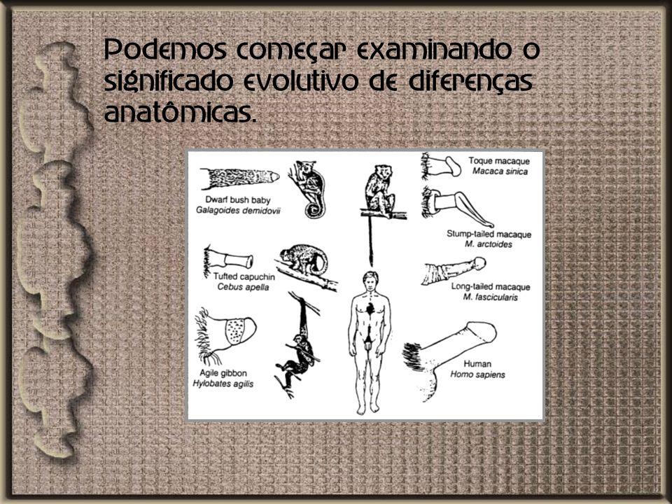 Podemos começar examinando o significado evolutivo de diferenças anatômicas.