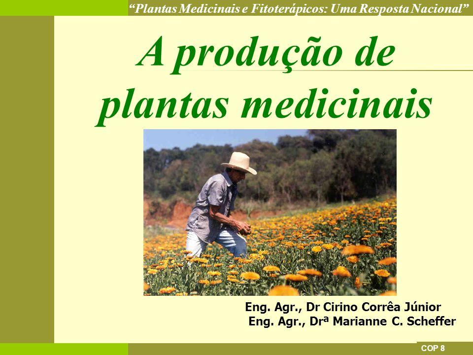 A produção de plantas medicinais