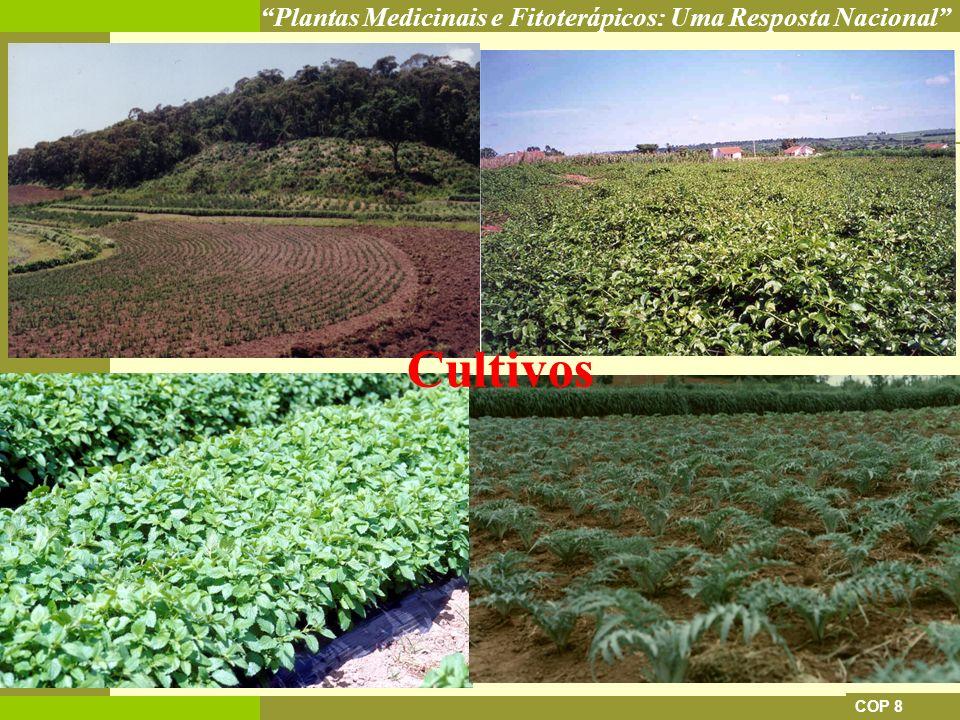Cultivos COP 8